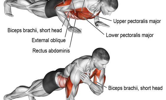 تمرين الضغط مع لمس الكتف Biceps Brachii Biceps Movie Posters