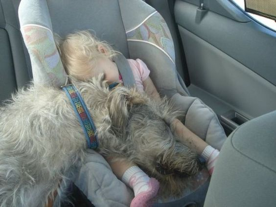 Baby and dog sleeping in baby car seat.: