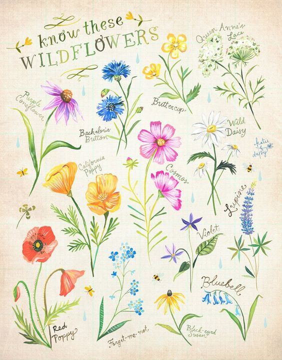 Know These Wildflowers print Katie Daisy Art Watercolor | Etsy