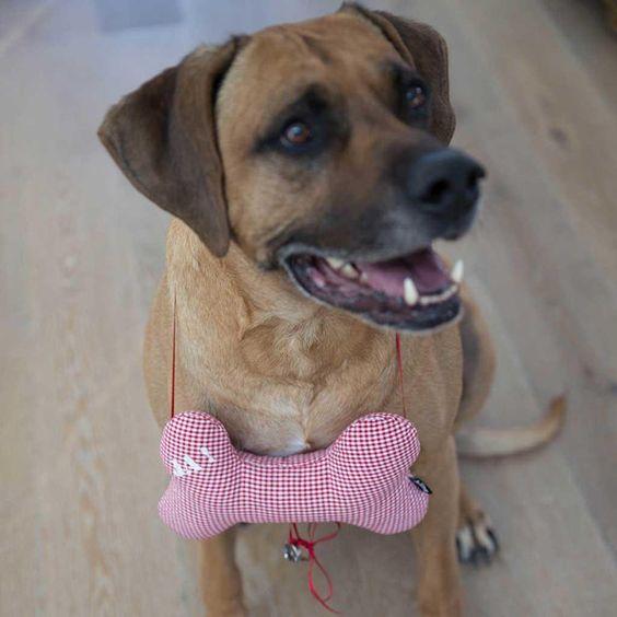 Ringkissen oder Hochzeitsantrag für Hunde von biine-wedding auf DaWanda.com