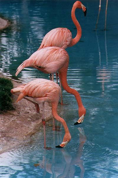 flamingos | Besides, everyone needs at least one pink flamingo in their life,