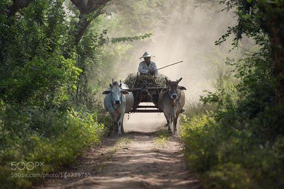Transport http://ift.tt/21gGzoB AnimalAnimalsBeachPeoplePhotographyBlueVehicleAdultHorizontalOne PersonDayOutdoorsMyanmarAsiaFarmerColor ImageCoastalAdults OnlyLivestockFeatureMode of TransportOccupationOne ManbestofmarchThemes IncidentalCow MenOnly DomesticAnimal-Powered