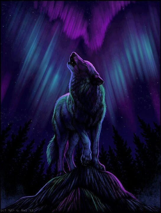 real northern lights wolf - photo #15
