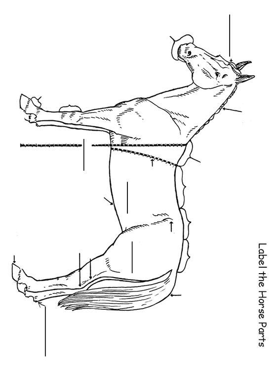 Printables Horse Anatomy Worksheet homeschool helper onlines free label the horse worksheet blank anatomy worksheet