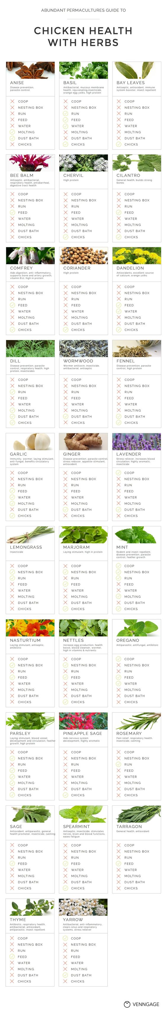 The ultimate chart of herbs for chicken health. Herbs are key to raising chickens naturally.