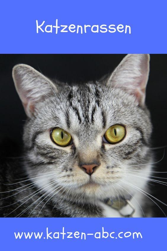 Pin Auf Katzenversorgung