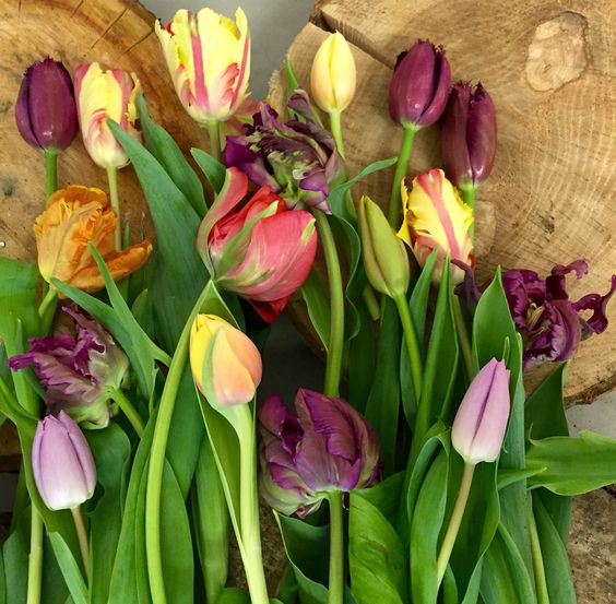 Tulips, Geschikt Groen Geschikt