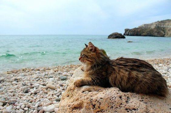 Beach Kitty enjoying the waves