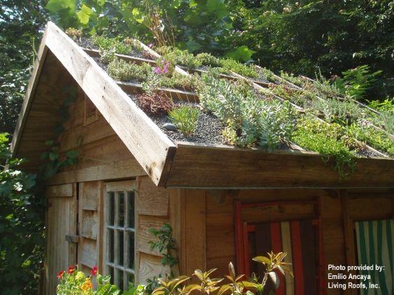 I want a green roof!
