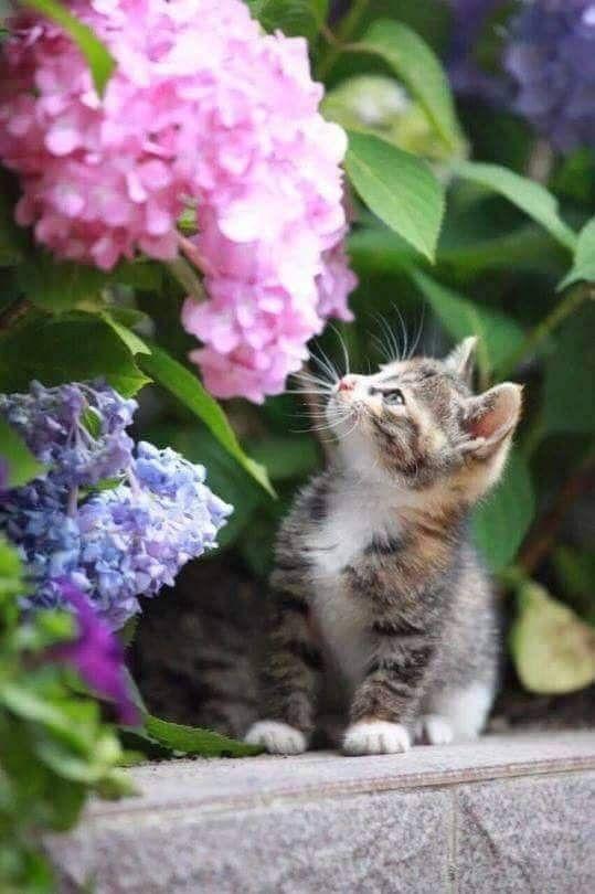 399223e2b9aa6fd8ccfa7370e81e039e - How To Get A Wild Kitten To Trust You
