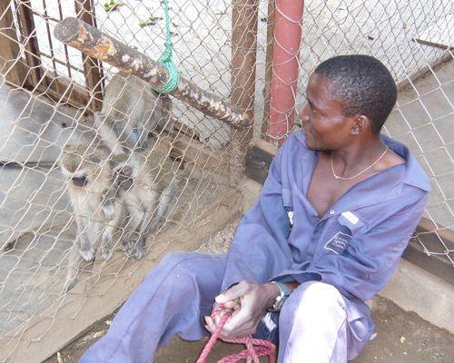 9 children raised by animals: Ugandan monkey boy
