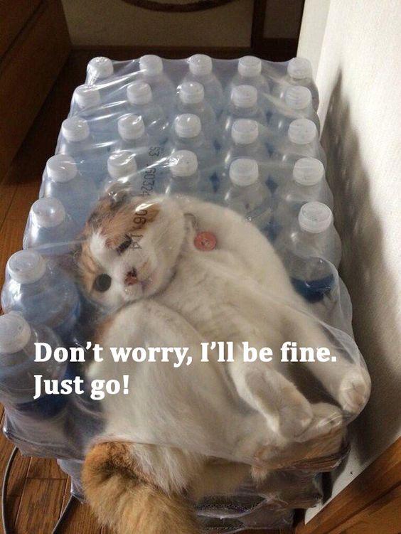 confused-cat-1