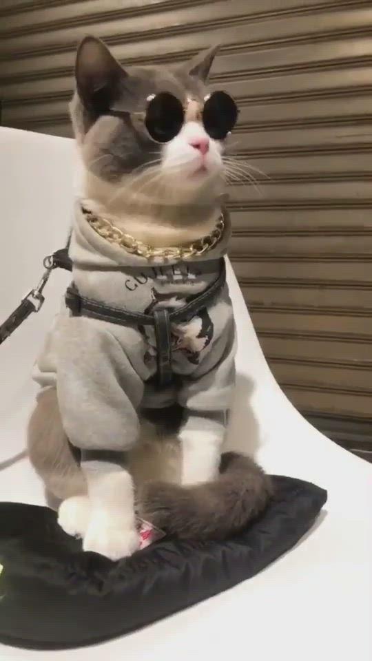 Cute Cat Videos Cat Names Cat House Cat Sleep Video In 2021 Cute Cat Gif Cat Sleeping Pretty Cats