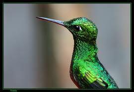 Resultado de imagen para animales de la amazonia colombiana