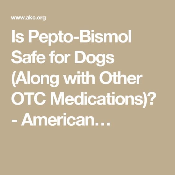 Is Pepto-Bismol Safe for Dogs (Along with Other OTC Medications)? - American…