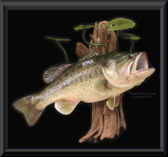 Google largemouth bass and bass on pinterest for Fiberglass fish replicas