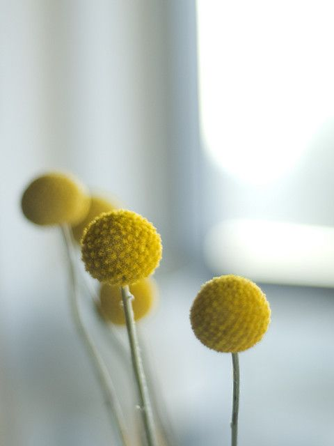 .: Yellow Flowers, Flower Ball, Room Design, Sun Flowers, Color Yellow