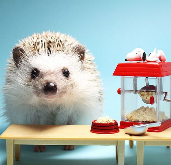 15 Uh-Dorable Animal Instagrams That Will Brighten Your Day