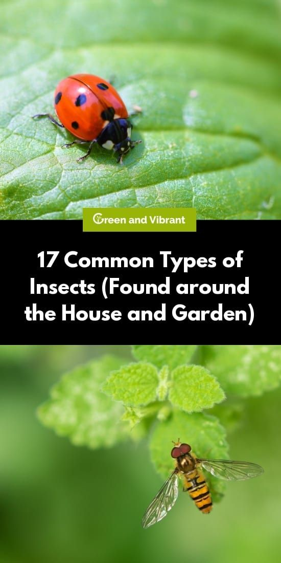 17 Common Types Of Insects Found Around The Home And Garden In 2020 Types Of Insects Insects Garden Pests