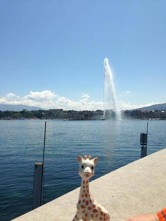 photo drole de sophie la girafe à Genève Suisse
