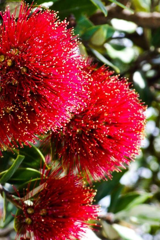 New Zealand Christmas Kiwi Summer Christmas Christmas Designs Christmas Images