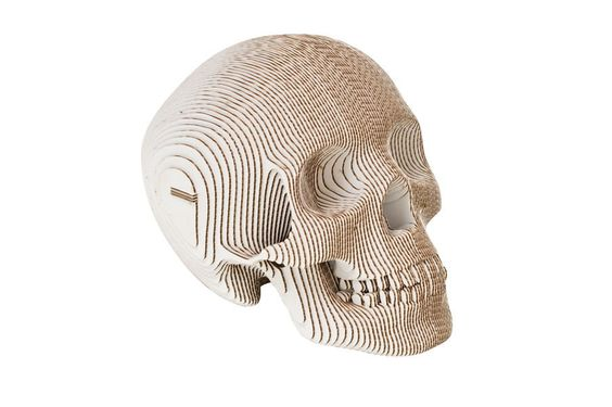 "Cardboard Safari - ""Vince - Human Skull"""