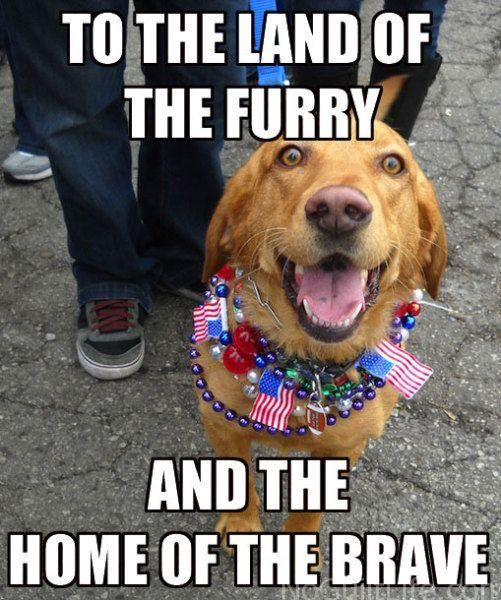 Funny 4th Of July Memes No Guilt Life Funny 4th Of July Fourth Of July Meme Patriotic Pets
