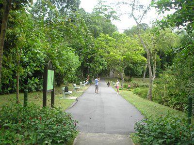 Ngắm cảnh rừng xanh tươi xung quanh