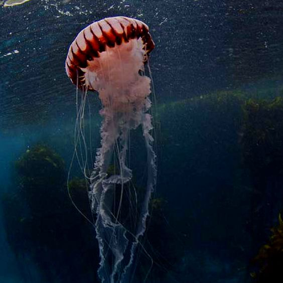 Jellyfish allow themselves to drift with the tide, but when it's time to go their own way they do it boldly. *photo source: emaciat3d