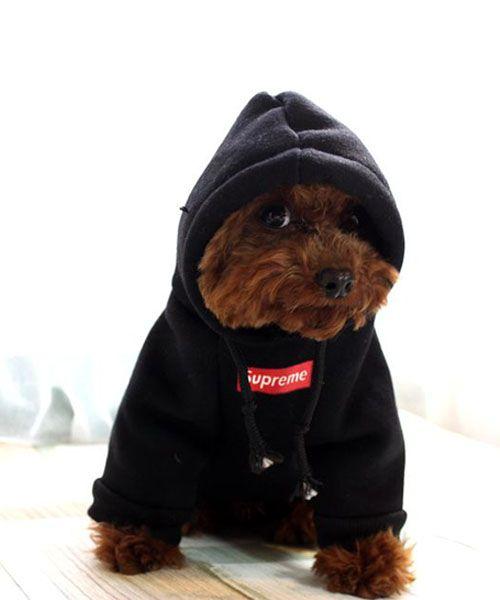 Cozaka Com ファッション通販サイト ブランドファッション物n級品激安販売 猫 洋服 犬のドレス ペット服