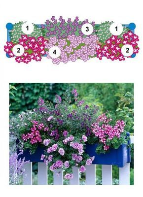 Balkonblumen Fantasievoll Kombiniert Balkon Blumen