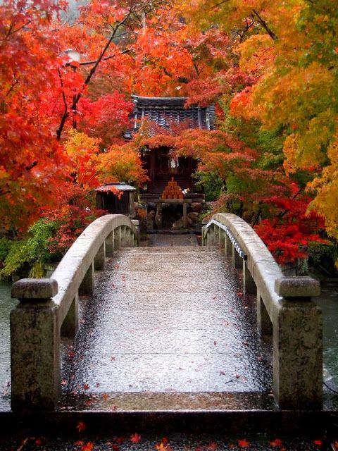 Eikando Zenrinji temple in Kyoto ,Japan  Japon  Pinterest  Automne, Temple...