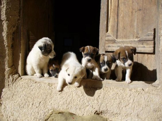 Tali S Pups Nowzad Animal Shelter Kabul Afghanistan