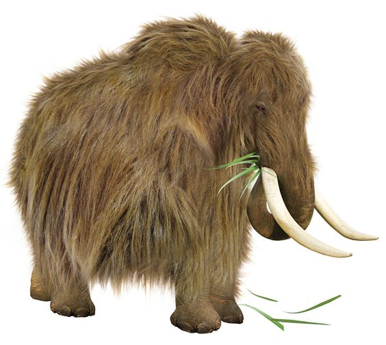 New cloning technology has enabled the woolly mammoth – extinct for 5,000 years – to be brought back to life. Previous attempts to clone mammoths had failed, because the cell nuclei were too badly damaged by ice crystals; but new techniques have overcome this problem.By the 2030s, they are appearing in a number of zoos and private collections. Other extinct mammals are cloned too, such as the sabre-tooth tiger and Megatherium
