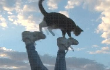 Other Funny Gifs http://gif-tv.tumblr.com/: