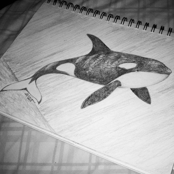 Orca. Shamu. Drawing or sketch