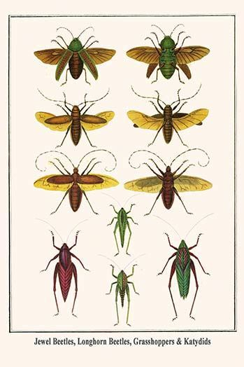 'Jewel Beetles Longhorn Beetles Grasshoppers and Katydids' by Albertus Seba Graphic Art