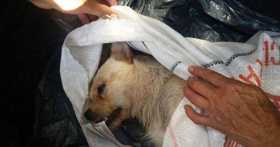 Cárcel a los enfermos que mataron a un perro usándolo como una pelota FIRMA Y COMPARTE ESTA...