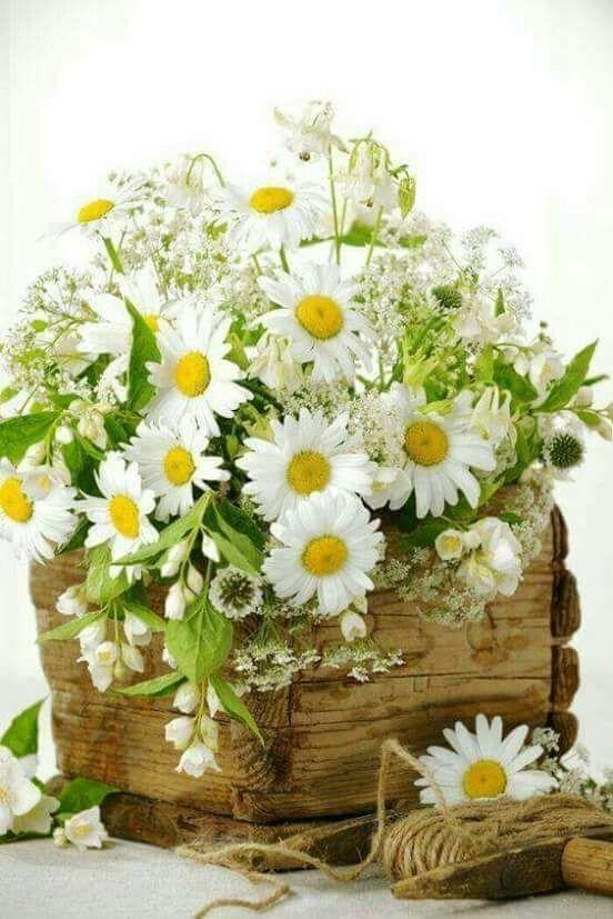 Pin By Ashley Heath On Afrikaans Beautiful Flower Arrangements Flowers Bouquet Pretty Flowers