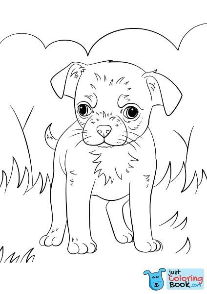 Chihuahua Puppy Coloring Page Free Printable Coloring Pages For Chihuahua Dog Coloring Pages Puppy Coloring Pages Dog Coloring Page Chihuahua Puppies