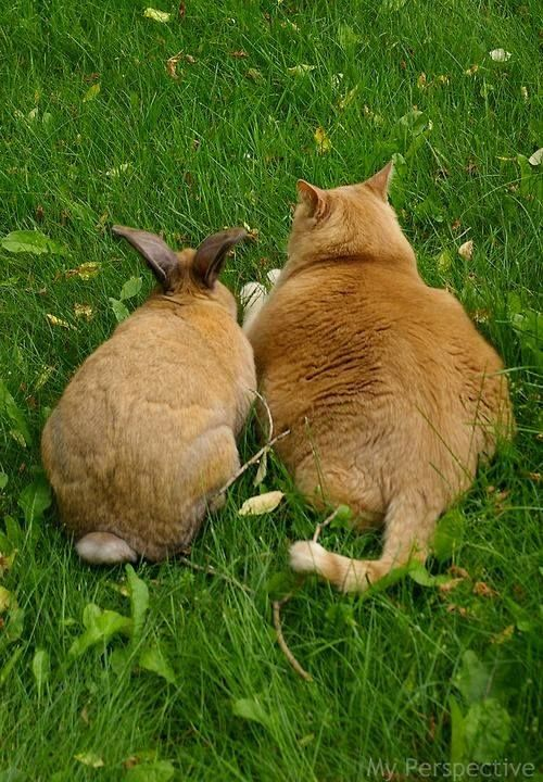 Bunny and cat :):