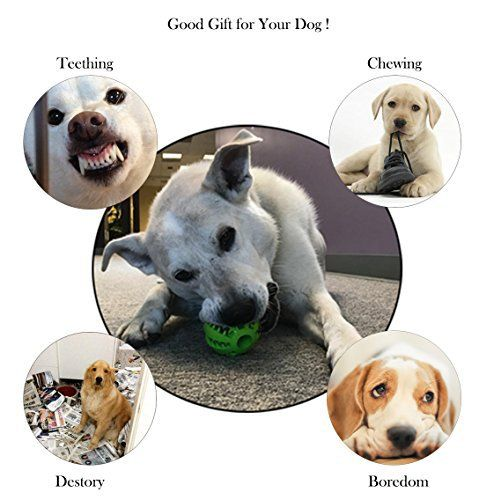 Top 10 Dog Toys For Labs Of 2020 Best Dog Toys Dog Toys Dogs
