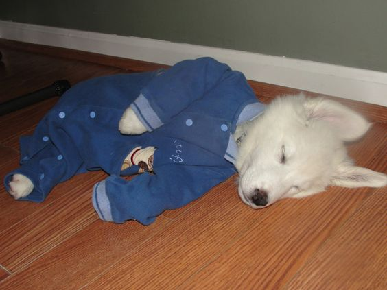 Puppies in Pajamas.