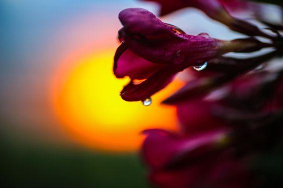 Photograph sunset after rain by Johannes Gradinger on 500px