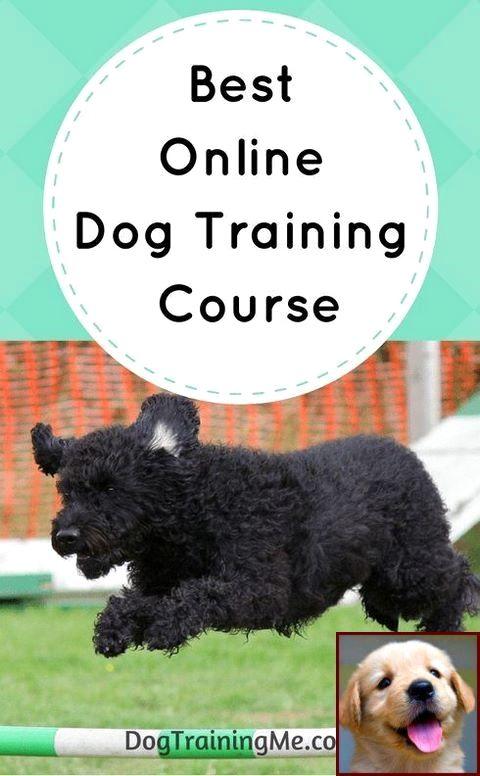 Dog Behavior Rehabilitation Center Near Me And Dog Training