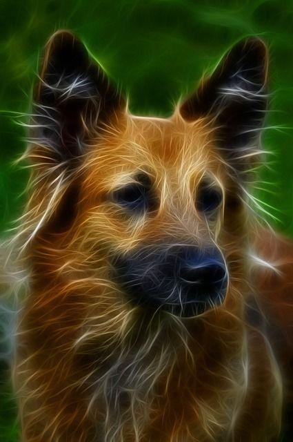 Free Illustration: Dog, Digital Art, Fractal, Canine - Free Image ...