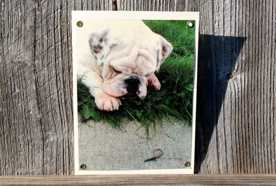 Bulldog and Earthworm Blank Note Card Animal by HBBeanstalk, $3.00