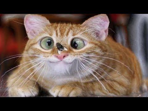 Рыжий соня :)) Спящий #кот | Кошки и котята, Смешные котята ... | 360x480