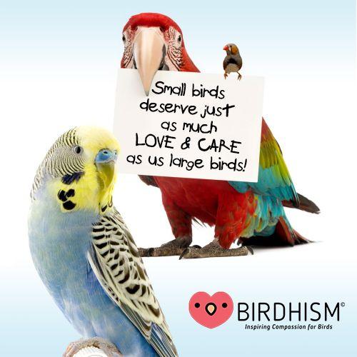 Pin By Birdhism On Birdhism In 2020 Birds Pet Birds Cute Birds