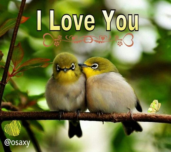 Love Birds Good Morning Wallpaper : Pinterest The world s catalog of ideas